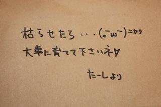 0608 (3).JPG