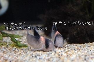 0511 (5).JPG