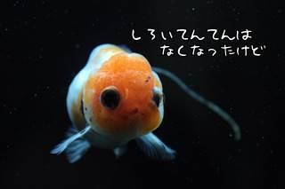 0521 (3).JPG