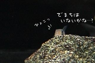 0606 (1).JPG