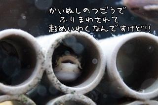 0702 (6).JPG