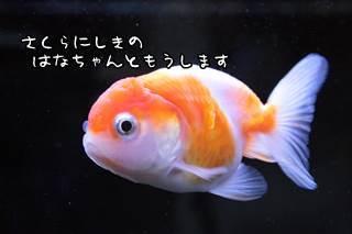 0912 (3).JPG