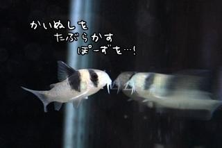 0916 (12).JPG